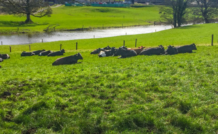 30ac contract rearing unit established at Ballyhaise