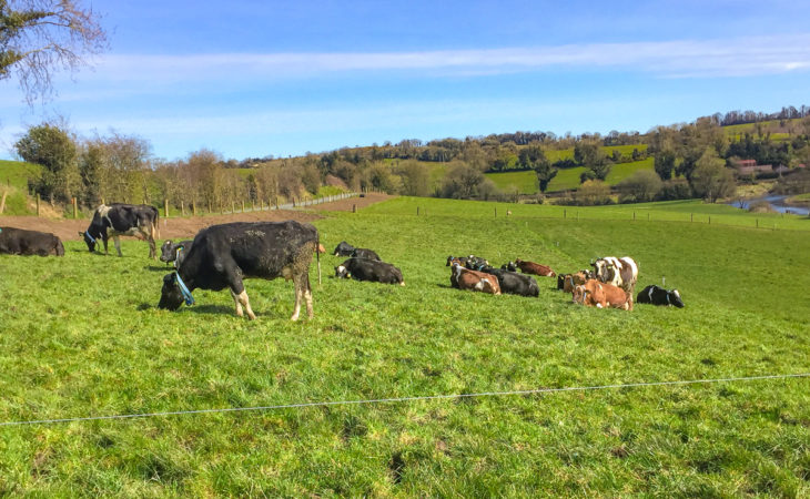 Worrying fertility statistics from herds in the Cavan/Monaghan region