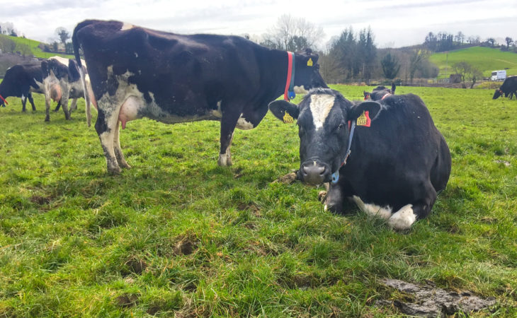 Dairy focus: What's been achieved in 14 years at Ballyhaise?