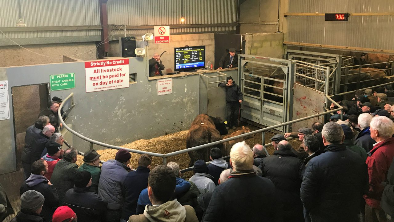 Mart trade: Quality weanlings and cows in demand across the country