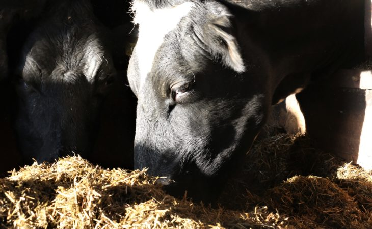 Supplementary feed costing Antrim farmer £10,000 a month