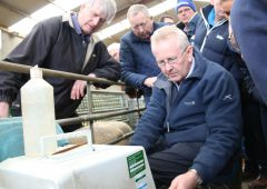 Northern sheep breeders call for Sheep Ireland style programme