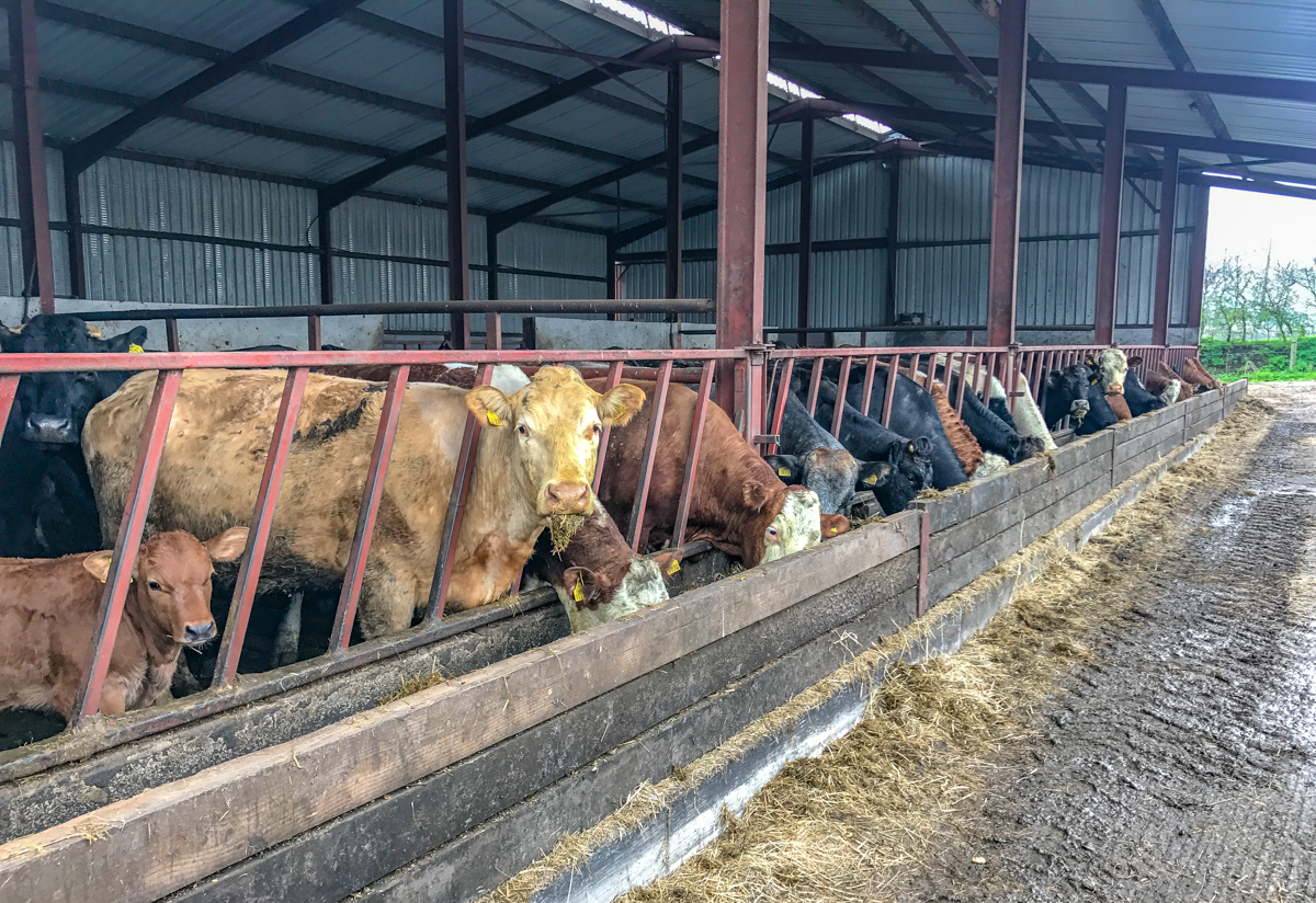 Buildings focus: A self-erected beef unit constructed