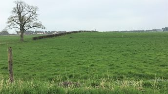 Should I graze my silage ground or close it up?
