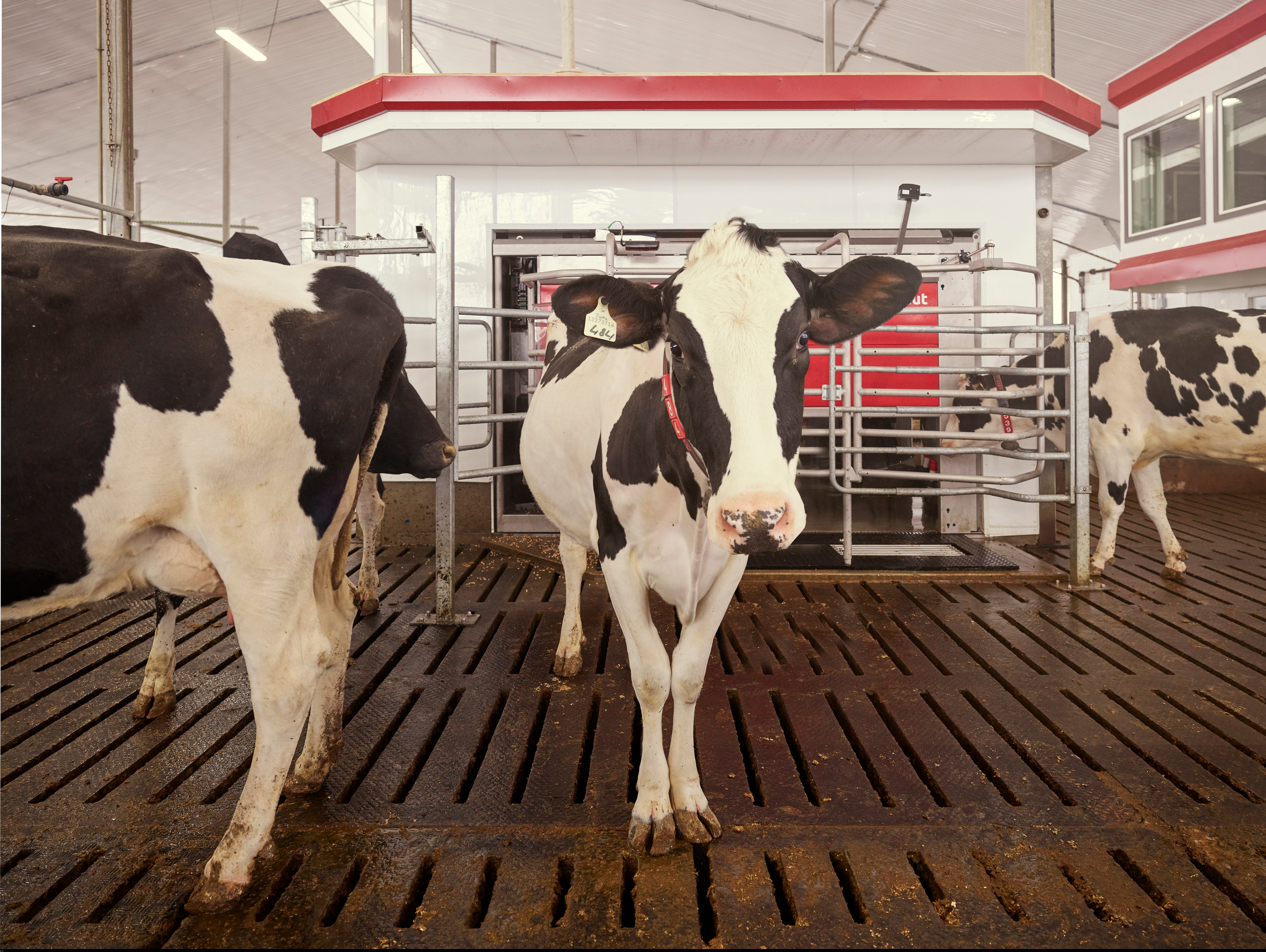 Society demand more and more from dairy farmers when it comes to animal welfare and sustainability commented ceo alexander van der lely when marking