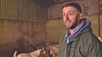 Rare Breed farmer joins Open Farm Weekend line-up