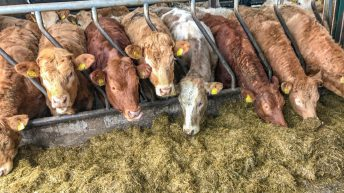Beef trade: Little change in price as weekly kill bounces back