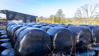 Silage prices vary across the country
