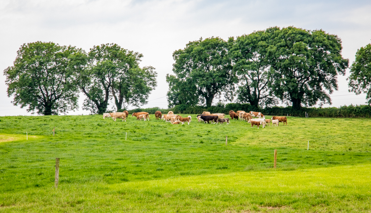 PGI application for 'Irish Grass Fed Beef' to open to opposition in autumn