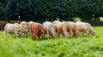 IFA urges support for Teagasc climate blueprint; but why?