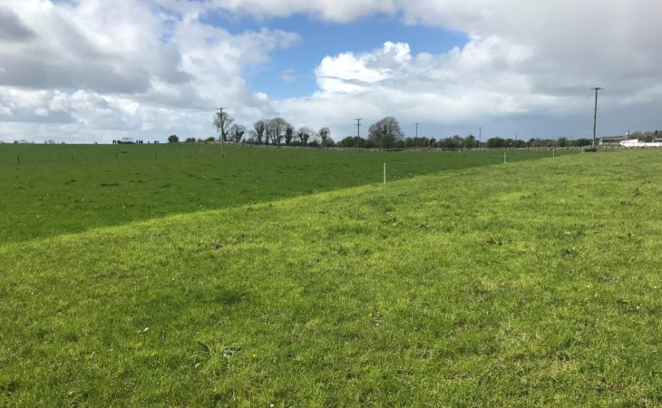 What size should my paddocks be and how many do I need?