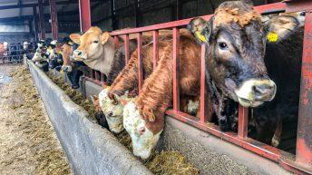 Beef focus: Self sufficiency boosts profit on beef enterprise in Co. Kilkenny