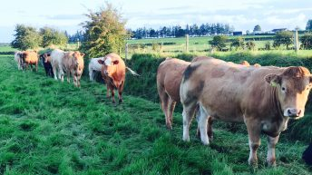 Beef price: How does Ireland compare with Europe after price cuts?