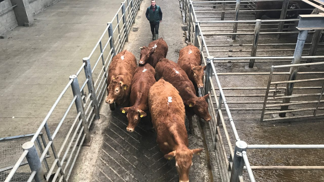 Cattle marts: Trade witnesses a welcome boost