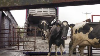 Dungiven dairy farmer 'fed up' of red tape to move to Canada
