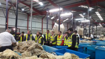 Ulster Wool launches new scheme for first-time sheep farmers