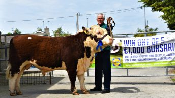 Pics: Hereford society sees out spring with sprightly sale