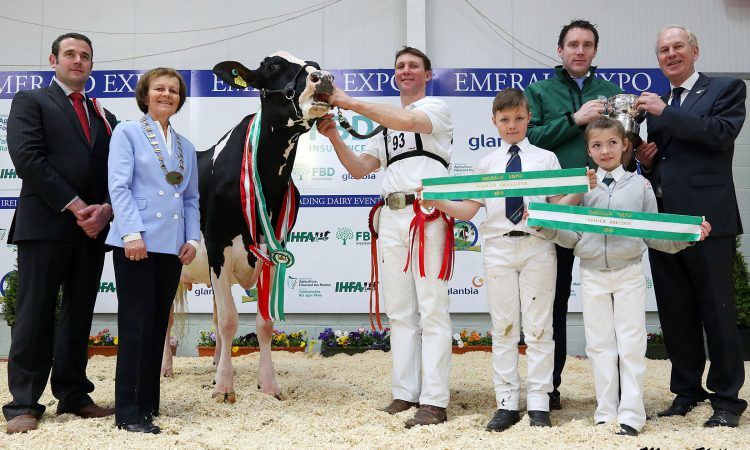 Hallow Holsteins hoover up at Emerald Expo