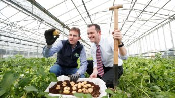 New season spuds survive storms and snow to surface at Aldi