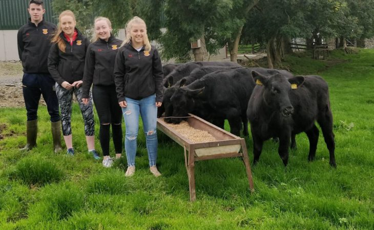 Gate to plate: 'Royal' students showcase perks of Angus breed