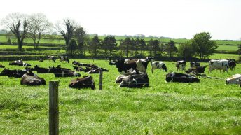 'Lack of promotion of dairy farming careers needs to be addressed'