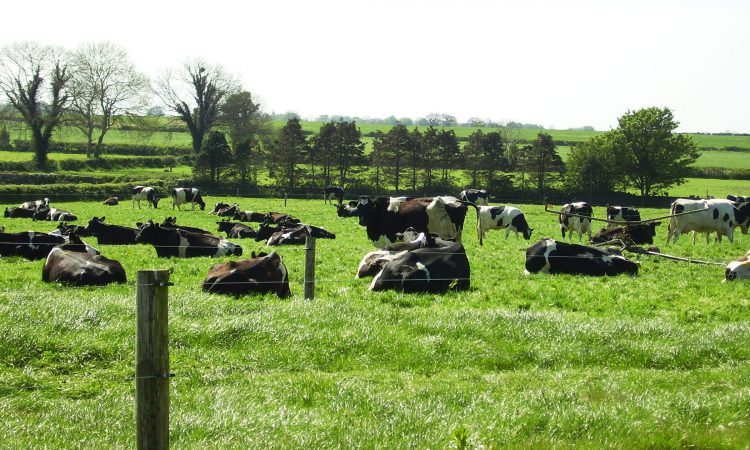 Arrabawn holds base milk price for May