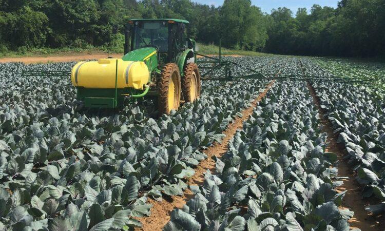 Tillage focus: This Irish man is planting vegetables in the North Carolina hills