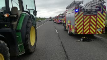 Collision involving calves en route to mart