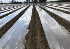 Plastic shining across the country as maize acreage booms
