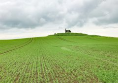Tillage focus: Whiskey and beef from spring barley in Co. Kilkenny