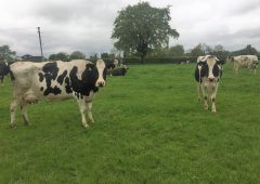 Kerry holds its October milk price