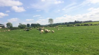 Sheep focus: Maximising production from every hectare
