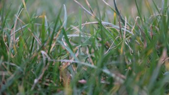 GrassCheck: A second boom week on the cards