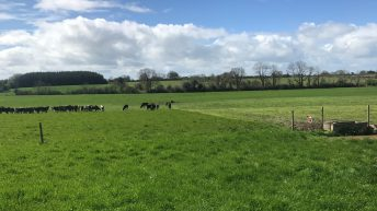 Grass focus: Making more from less on rented ground in Co. Galway