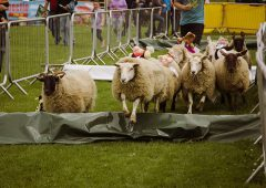 Kildare Show set to showcase a taste of rural life
