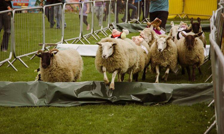 Kildare Show set to showcase a taste of rural life