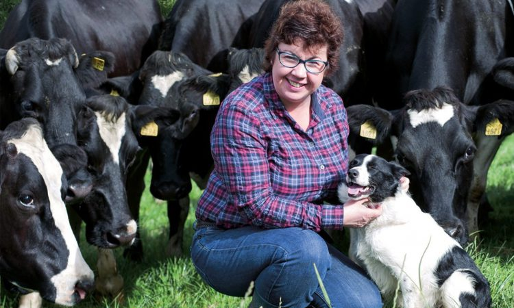 For Sixsmith 'home will always be where the cows are'