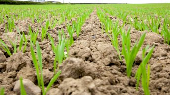 CROPS WATCH: How to avoid 'making gravy' in a spray tank mix