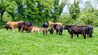 Fianna Fáil to table 14-point motion to tackle 'ongoing beef crisis'
