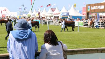Results and pictures: All the action from the beef rings on Balmoral Day 1
