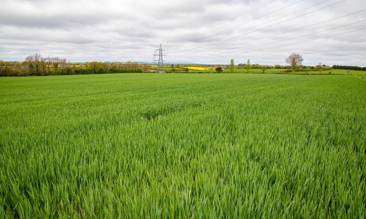 Tillage sector in Ireland set to be 'battered' – ICSA