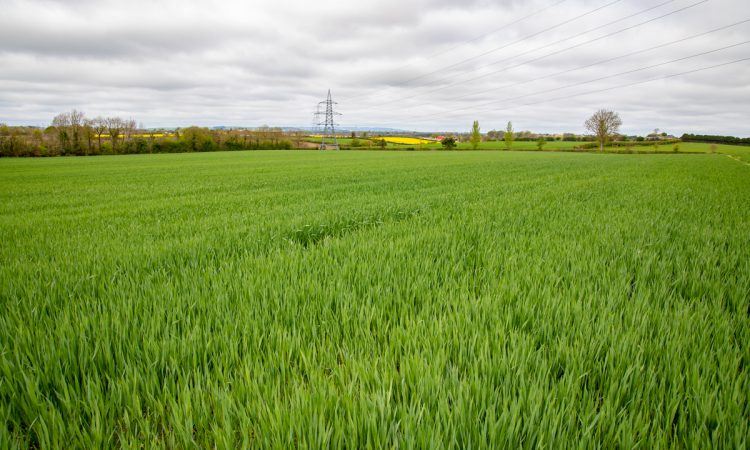 Oats seed rate should be reduced this season