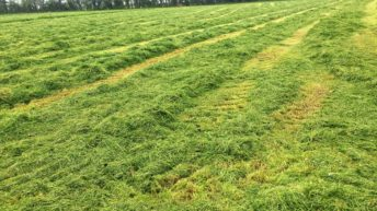 Dairy focus: Silage season kicks into gear in Co. Kildare