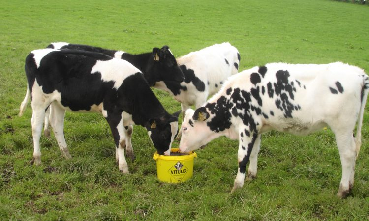 Calves and farm-input costs reap benefits of Vitulix feed block