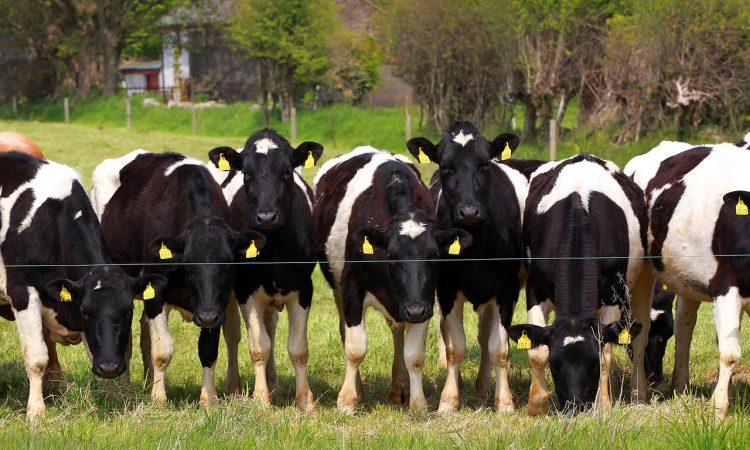 'Effective worm control: Cattle must be allowed to develop a level of natural immunity'