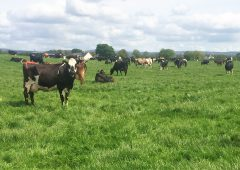 Dairy focus: Buying a farm and growing to 280 cows in Co. Offaly