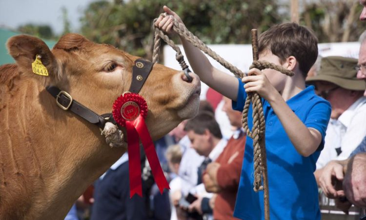 Young people encouraged to attend Limousin YMA event