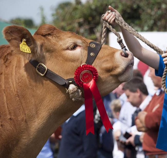 New CEO appointed to lead the Irish Limousin Cattle Society