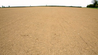 CROPS WATCH: Beet sown later than planned and early herbicide is essential