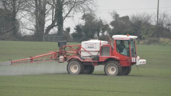 Neonicotinoids to be available for autumn planting